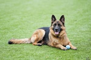 Hundesport Kunstrasen